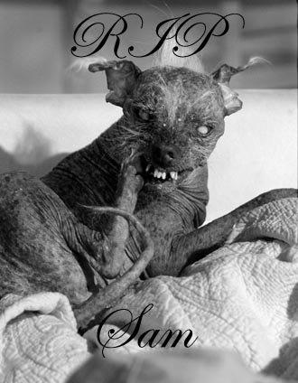 RIP SAM