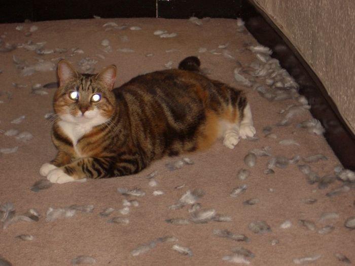 cat fails to look innocent