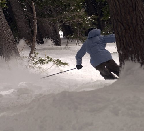rippin through some trees