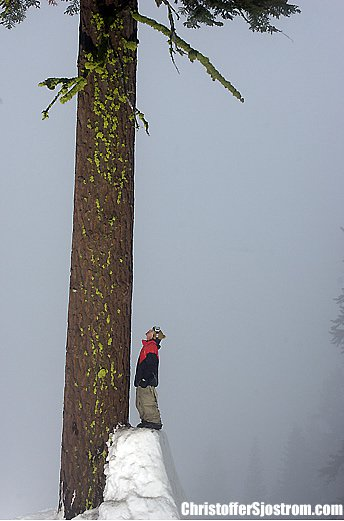 Candide tree jib by Sjöström