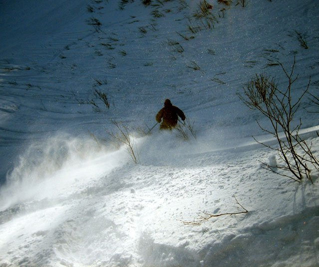 Labrador fluffly stuff, early season