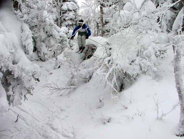 jay peak woods