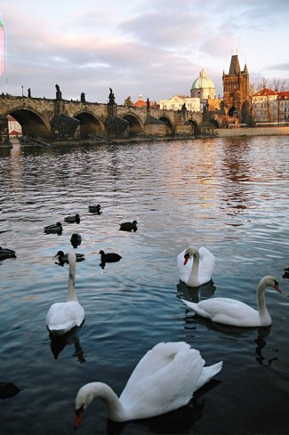 the charles and swans