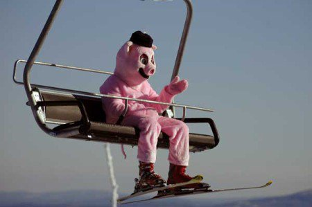 a skiing pig