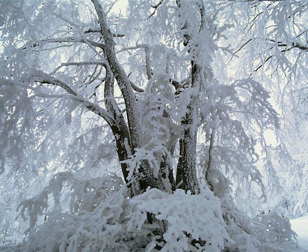 snow+tree=scenery
