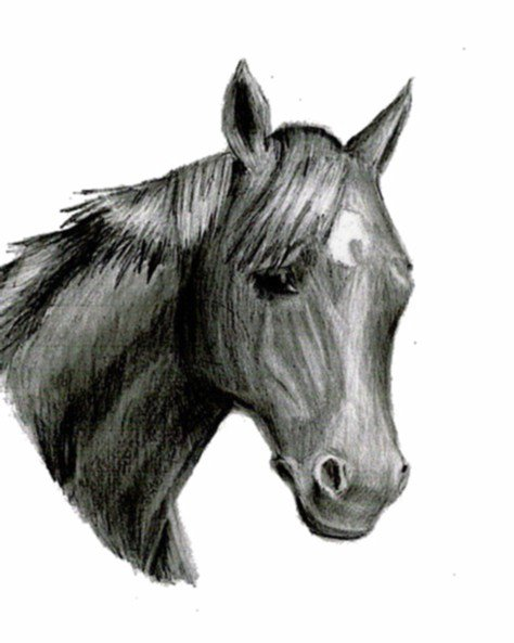 horsey drawing hehe