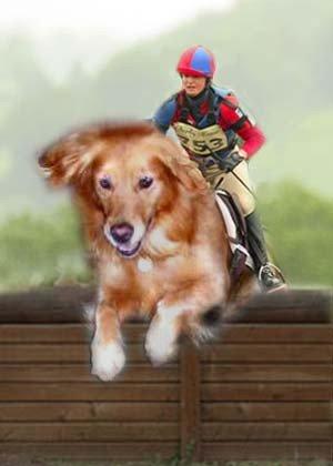 jumpin' dawgs!