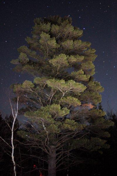 Cool Tree Night Shot