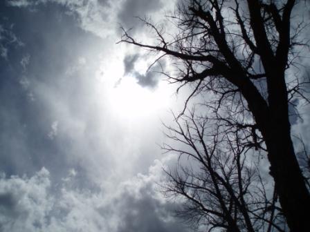 Looking skyward