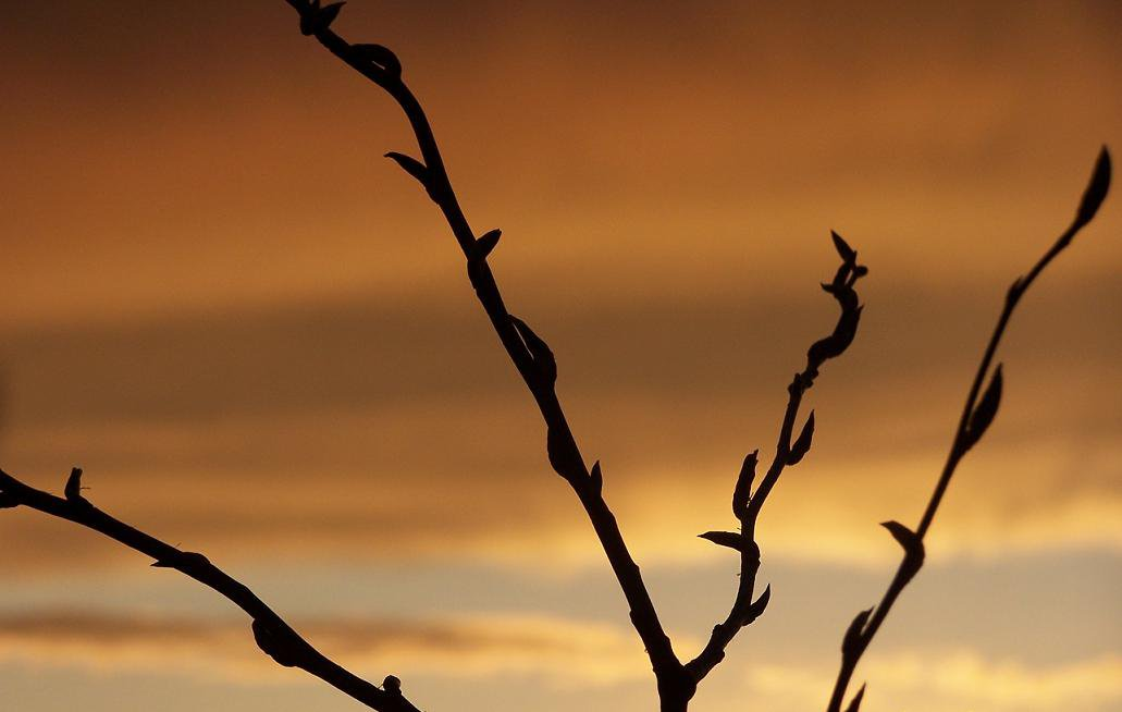 Kinda cool sunset + foilage