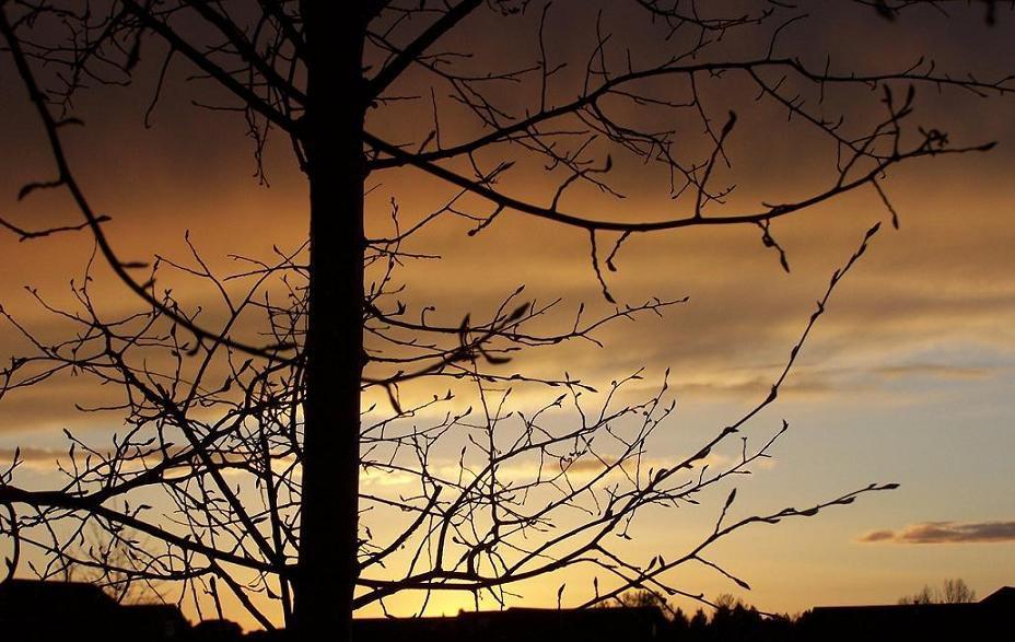 More foilage + sunset