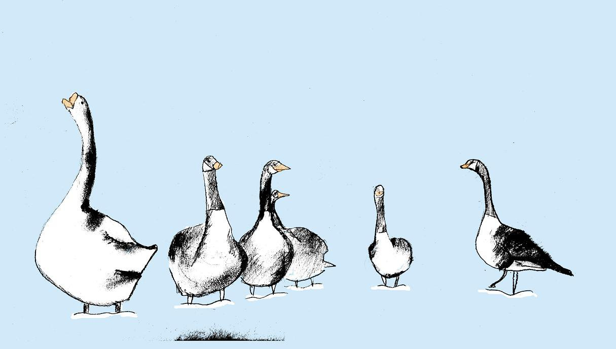 gooses geeses