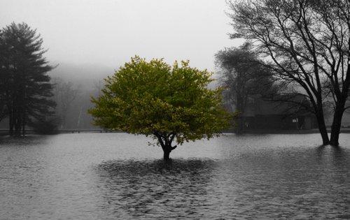 Tree Edit 5