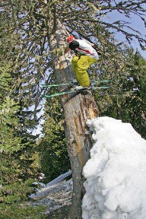 tree quater