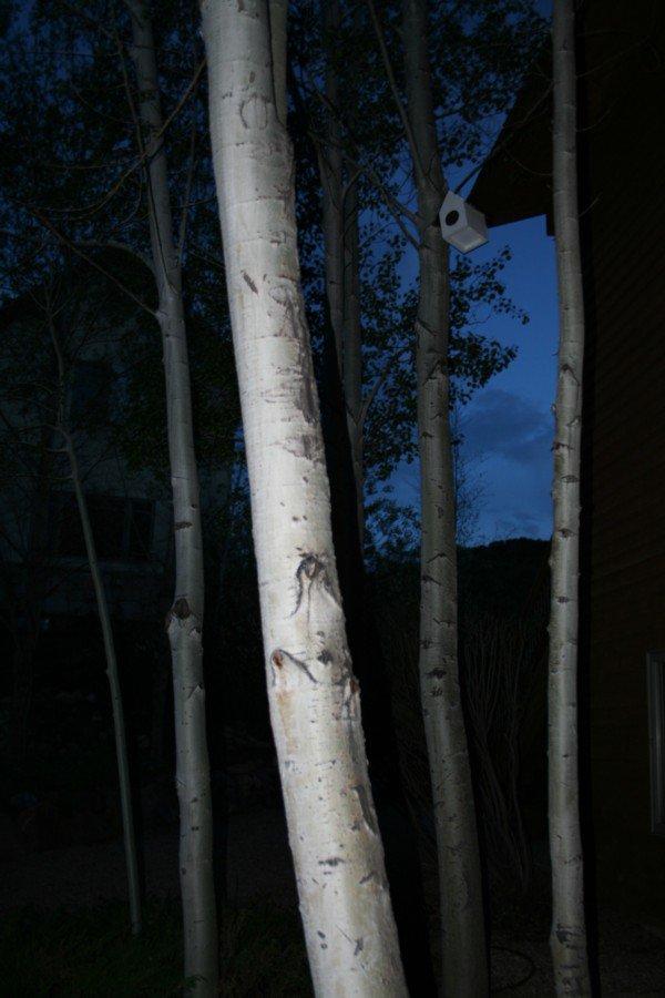 trees@ night