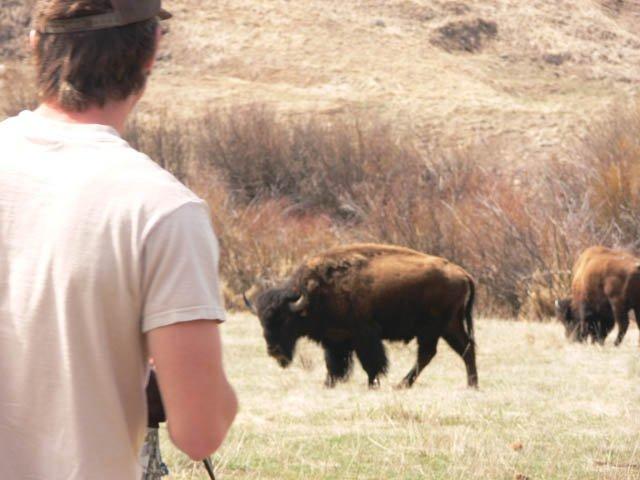 pissed off buffalo