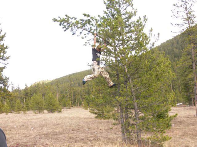 Tree swinging-