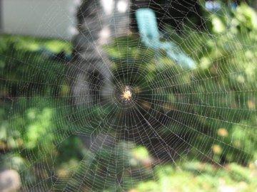 Spiders Invade Quebec!