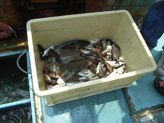 All the fish we caught