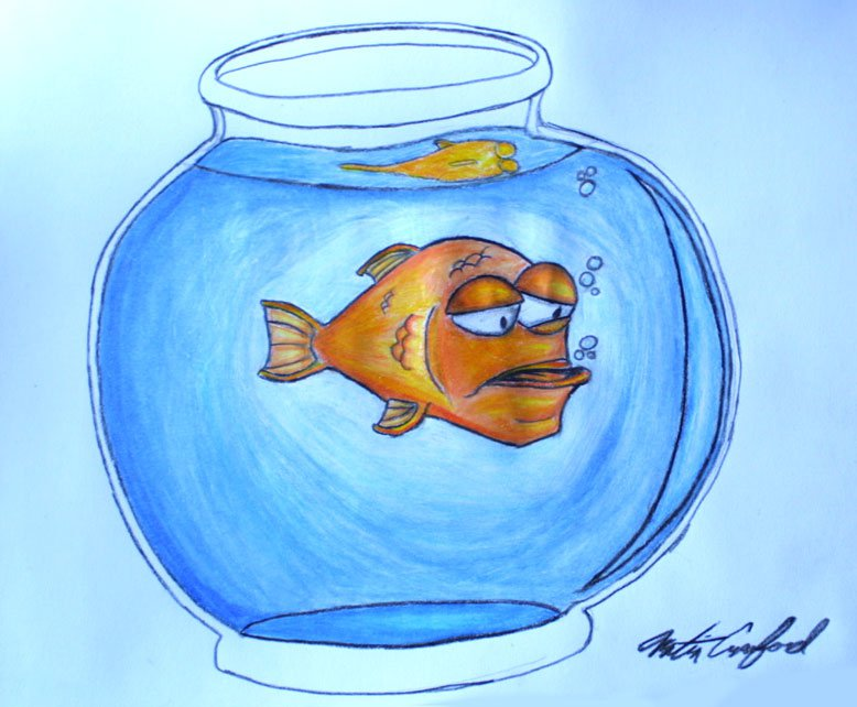 Meet Gill the goldfish