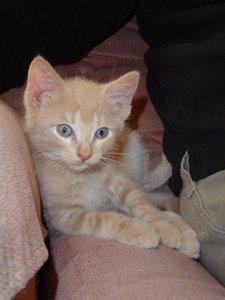 Meet my kitten tanner