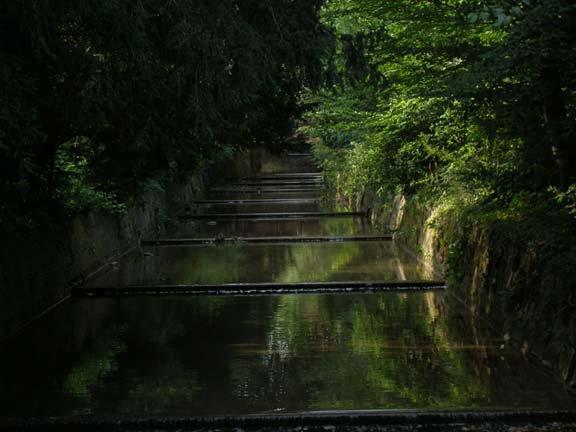 Shaded dammed stream