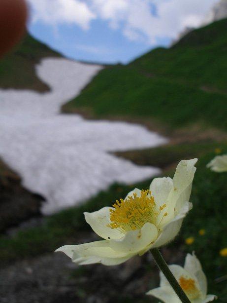 Macro on Flower 2