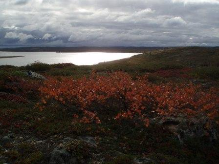 Fall on the tundra