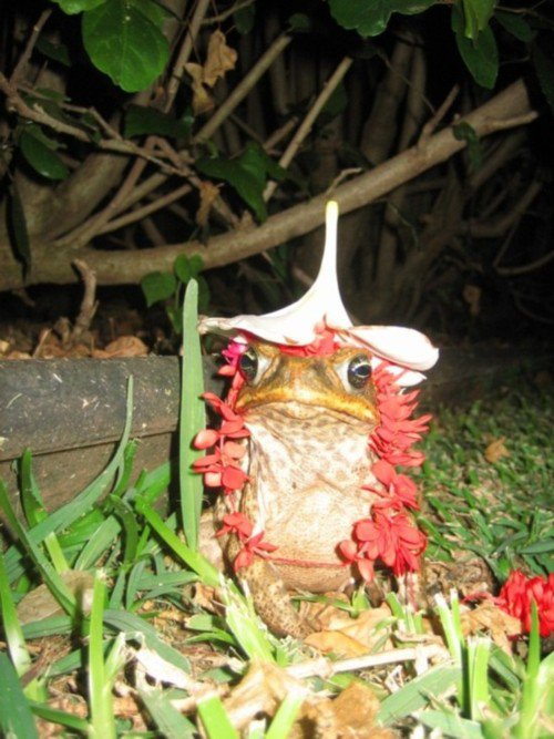 I lei'd a toad...