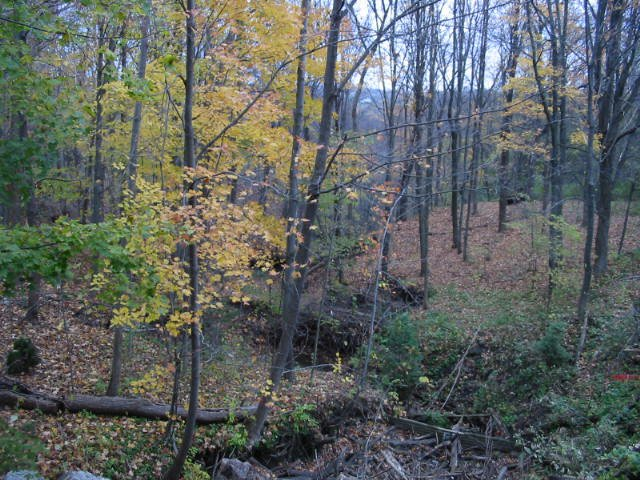 Dweez's trail 3