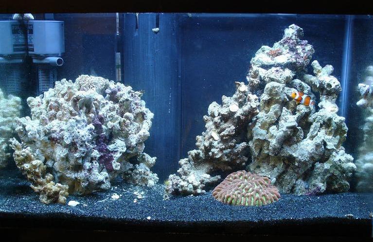 My salt water aquarium