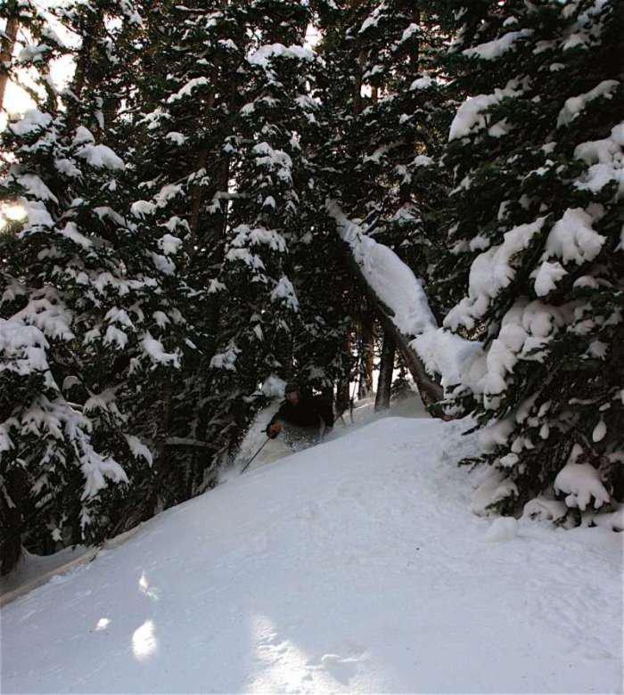 Tree's Loveland Pass November