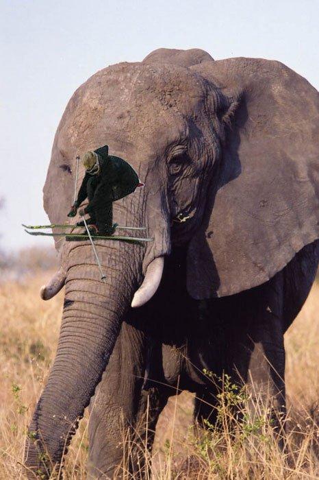 PSWAR Elephant grind