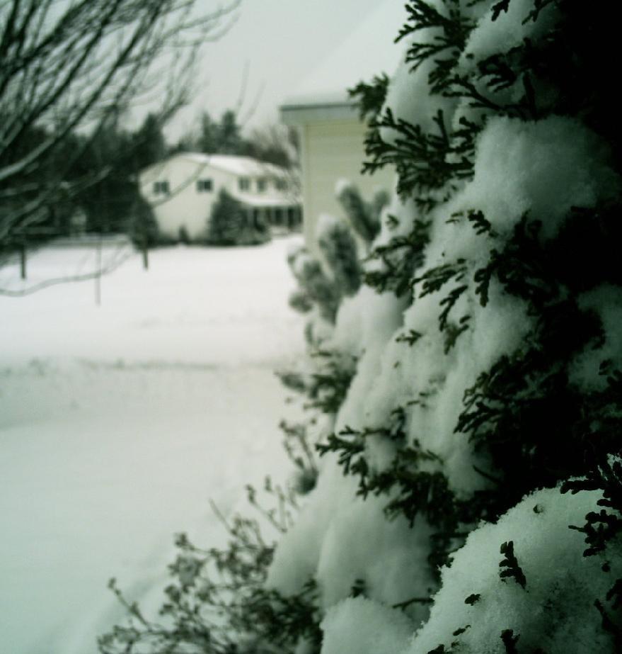 Snow day on the east coast