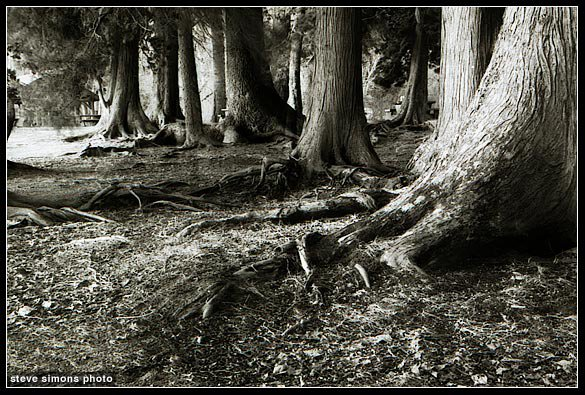 Lakelse Roots