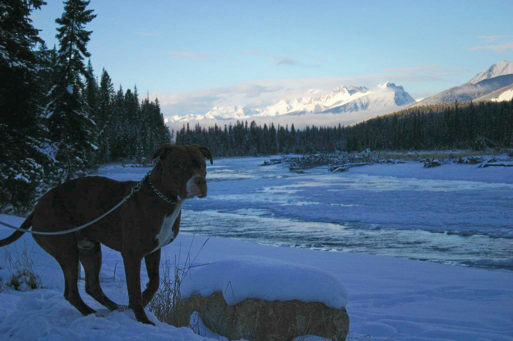 Sage on the way to Banff!