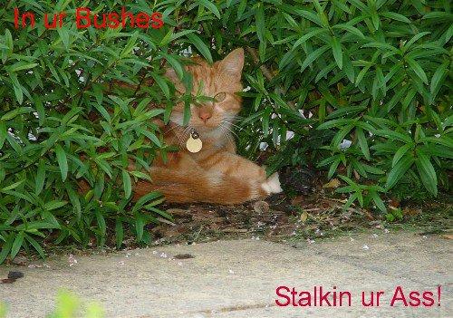 Stalkin u