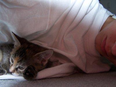 Kittty in muh white tee
