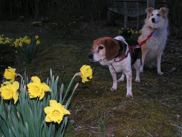 Smellin flowers