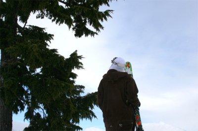 Bird Staredown