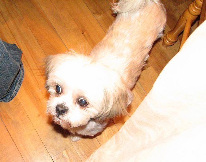 Ogly Kik-dog