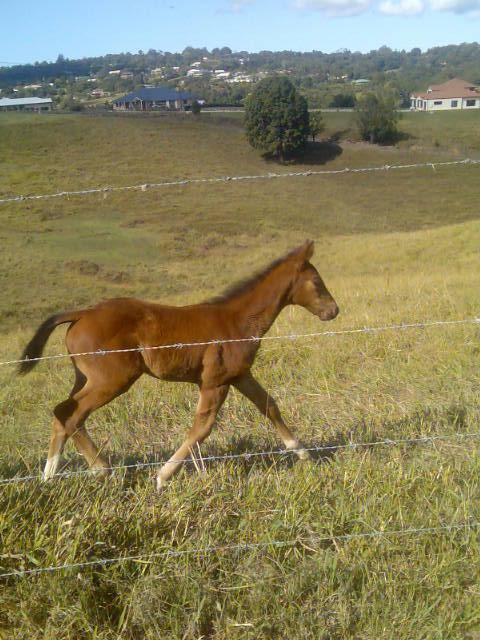 Baby race horse