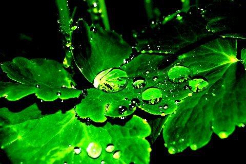 Rainy leaves (edited)
