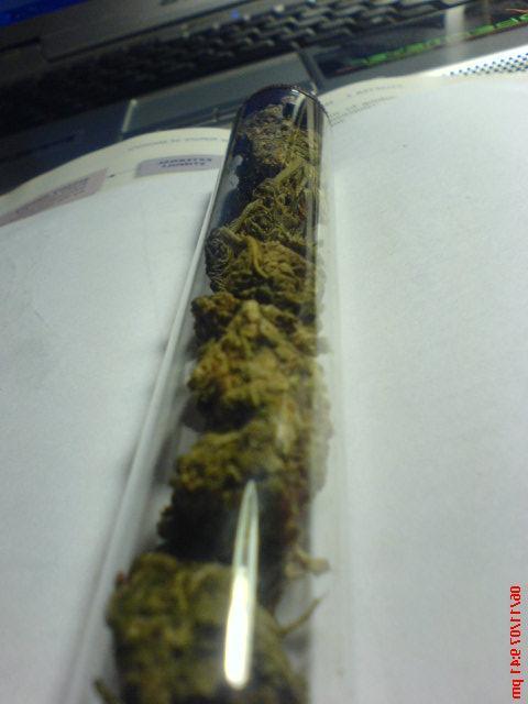 Sticky Green