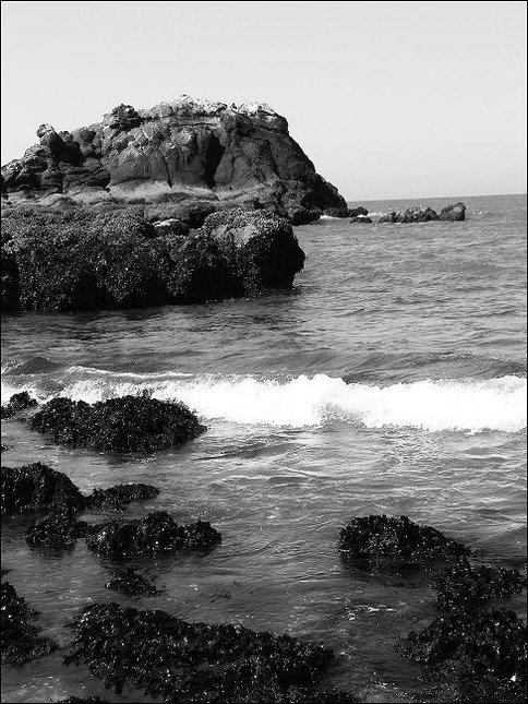 Yaquina Head Tidepools