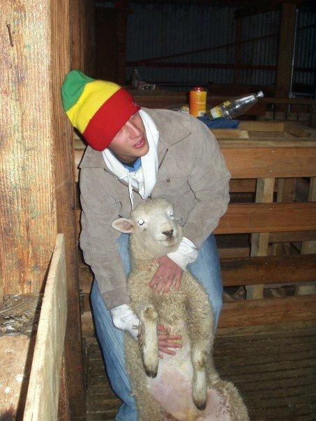 Gettign my sheep on