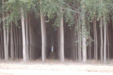 Tree Farm in Oregon