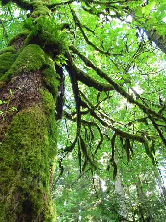Cathedral Grove - MacMillan Provincial Park