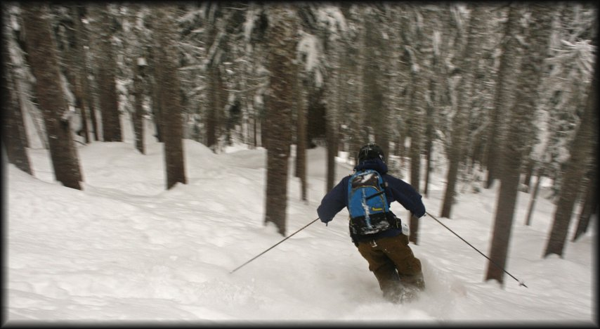 Forest Skiing