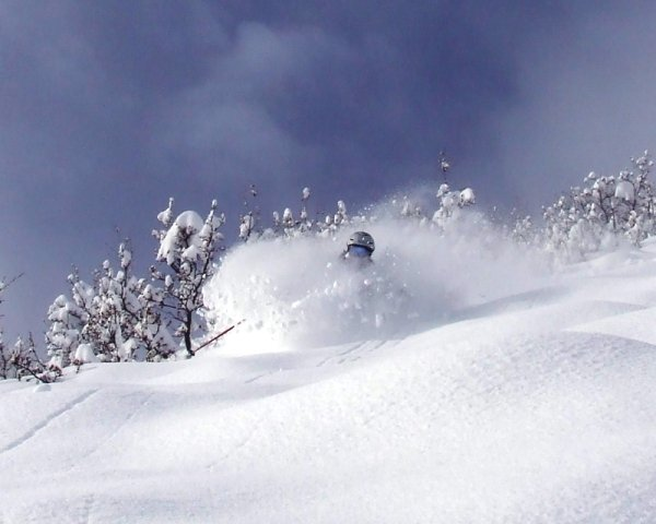 Bluebird Blower at The Can